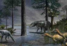 A scene from 232 million years ago, during the Carnian Pluvial Episode after which dinosaurs took over.