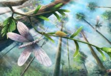 Ecological restoration of moths in the Cretaceous Burmese amber forest.