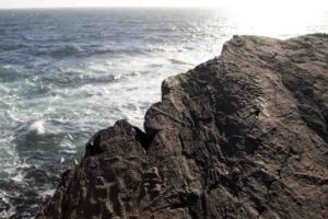 These are Ediacaran fossils at Mistaken Point, Newfoundland.