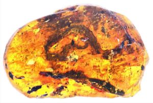 Skeletal remains from the Xiaophis myanmarensis snake hatchling trapped in Burmese amber.