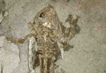 10 million-year-old frog from Libros, Spain