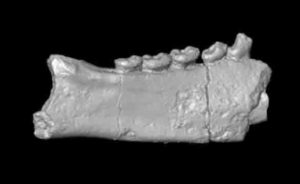 Fossilized fragments of primate jaws and teeth from Africa are changing what researchers thought they knew about when lemurs made it to Madagascar.