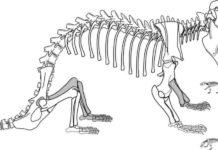 Kayentatherium wellesi
