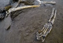The remains of skeletons that were found in the Pompeii archaeological site, Italy, Wednesday, Oct. 24, 2018. The Italian news agency ANSA says new excavations in the ancient buried city of Pompeii have yielded the undisturbed skeletons of people who had taken refuge from the eruption of Mount Vesuvius in A.D.79. The director of the Pompeii archaeological site, Massimo Osanna, told ANSA on Wednesday the skeletons, believed to be two women and three children, were still intact, having been left undisturbed despite looting at the site centuries ago.