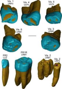This is a virtual rendering of the Visogliano and Fontana Ranuccio teeth.