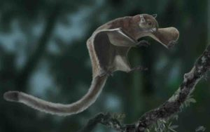 flying squirrel Miopetaurista neogrivensis.