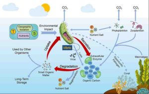 T, temperature; S, salinity; P, phosphate; N, nitrogen salt; Si, silicate; E, extracellular enzyme; POC, particulate organic carbon; DOC, dissolved organic carbon. Credit: ©Science China Press