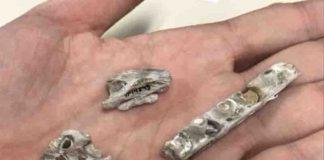 Tylosaurus fossil