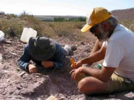 The region where the new species of sauropod was found is unusual as it would have been a desert during that era, 110 million years ago