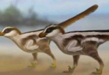 Dinosaur reconstructions by Dr Anthony Romilio