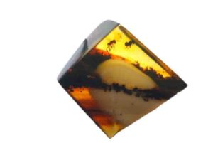 Mosquitoes in the amber.