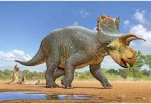 Crittendeceratops