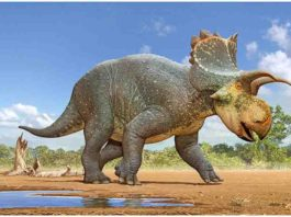 Crittendeceratops