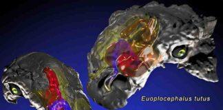 Panoplosaurus mirus and Euoplocephalus tutus.