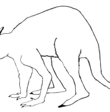 This is a drawing of the extinct Australian giant short-faced kangaroo Simosthenurus occidentalis, part of the Sthenurinae sub-family.