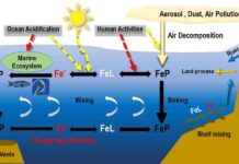 The iron cycle in the ocean
