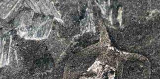 Amiskwia sagittiformis