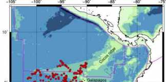 Floating seismometers dubbed MERMAIDs -- Mobile Earthquake Recording in Marine Areas by Independent Divers -- reveal that Galapagos volcanoes are fed by a mantle plume reaching 1,900 km deep. By letting their nine MERMAIDs float freely for two years, an international team of researchers created an artificial network of oceanic seismometers that could fill in one of the blank areas on the global geologic map, where otherwise no seismic information is available. Drifting a mile below the surface, MERMAIDs cover a large area. The red circles show where a MERMAID picked up a seismic signal. Credit: Courtesy of the researchers