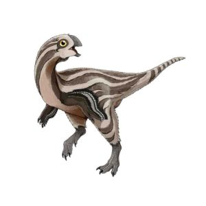 Gobiraptor reconstruction.
