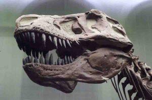 T. rex had an unusually flexible skull. Credit: Senckenberg