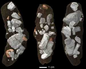 Coprolites, or fossil droppings, of the dinosaur-like archosaur Smok wawelski contain lots of chewed-up bone fragments. This led researchers at Uppsala University to conclude that this top predator was exploiting bones for salt and marrow, a behavior often linked to mammals but seldom to archosaurs. Credit: Martin Qvarnström