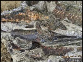 Fossilized fish piled one atop another