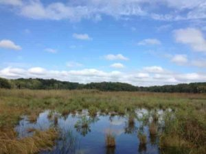 This is a tidal marsh in Maryland, on a tributary of Chesapeake Bay.