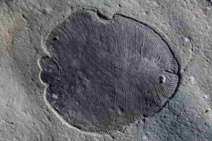 Scientists from The Australian National University have discovered the have discovered that 558 million-year-old Dickinsonia fossils do not reveal all of the features of the earliest known animals, which potentially had mouths and guts.