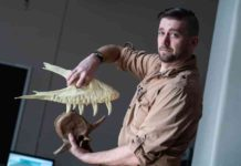 Joseph Peterson, a vertebrate paleontologist at the University of Wisconsin Oshkosh, demonstrates how a T. rex takes a bite.