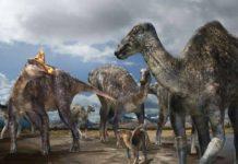 lambeosaurine (crested 'duck-billed' dinosaur)
