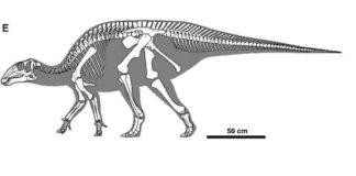 Gobihadros mongoliensis