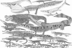 Crocodylomorphs were a highly morphologically and ecologically diverse clade. These extinct crocodile relatives had a much richer variety of skull shapes than living crocodilians, suggesting a wide range of feeding strategies. Credit: Darren Naish, Tetrapod Zoology