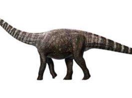 An artist's impression of Rhoetosaurus brownei, (c) Queensland Museum 2014. Credit: Konstantinov, Atuchin & Hocknull.