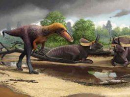tyrannosauroid Suskityrannus hazelae