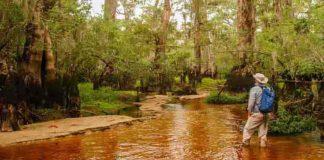 North Carolina's Black River