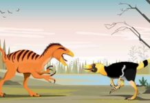 Phuwiangvenator and Vayuraptor were fast and dangerous predators. Although only half as long as its relative, the T. rex, Phuwiangvenator almost reached the size of an Asian elephant.