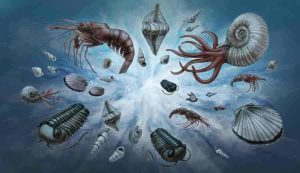 Illustration of marine fossils that have existed since the Cambrian. Represented taxa include brachiopods, trilobites, ammonites, bivalves, and decapods.