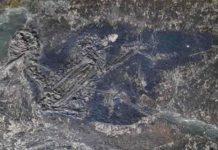 Eocoracias brachyptera fossil sample used for this study.