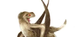 Reconstruction of the studied pterosaur