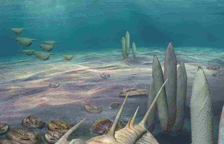 An artists impression of a Redlichia trilobite on the Cambrian seafloor.