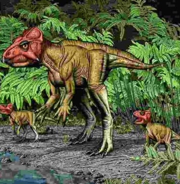 An artist's rendering of Auroraceratops shows its bipedal posture as well as the beak and frill that characterize it as a member of the horned dinosaurs. Paleontologists from Penn led a team in characterizing this species, discovered in China