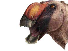 Aquilarhinus palimentus, or 'shovel-chinned eagle nose'. Illustration by ICRA Art
