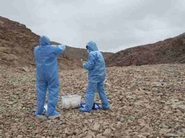 Picture taken at one of the sites inspected in the Coastal Range of the Atacama Desert. On this picture Professor Azua-Bustos and González-Silva are donning sterile suites and using sterile collecting materials in order to avoid the contamination of the sites studied. Credit: Margarita Azua