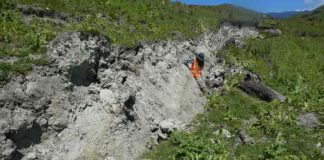 Jesse leaning against the fresh fault scarp of the Kekerengu fault, next to some of the curved slickenlines. Credit: Professor Tim Little