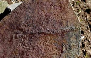 A fossilized trail of the animal Yilingia spiciformis, dating back 550 million years. The trail was found in China by a team of scientists including Shuhai Xiao of the Virginia Tech College of Science. Credit: Virginia Tech College of Science