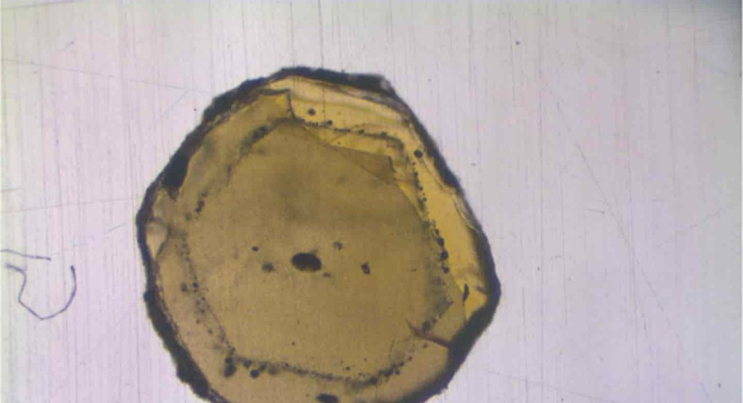 The mineral olivine contains melt inclusions (black dots), just a few micrometers in size. The geochemists isolated these inclusions and investigated the isotopic composition with mass spectrometers. Credit: Münster University - Felix Genske