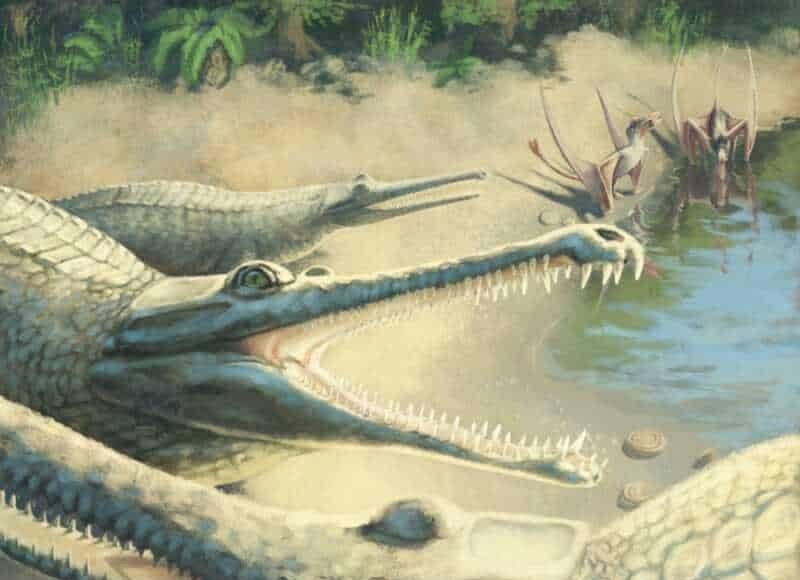 Jurassic crocodile. Artist's impression (credit: Julia Beier)