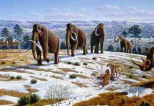 Woolly mammoth illustration Mauricio Antón © 2008 Public Library of Science