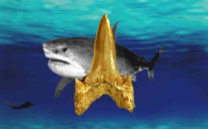 A 91-million-year-old fossil shark newly named Cretodus houghtonorum discovered in Kansas