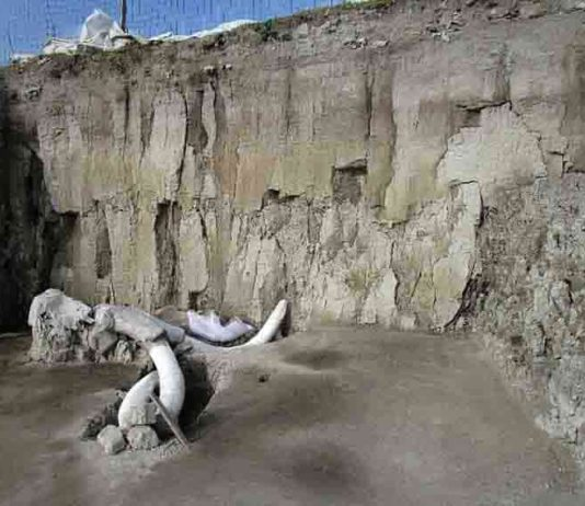 Mammoth bones are pictured in Tultepec, Mexico in this handout photograph released by Mexico's National Institute of Anthropology (INAH)